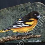 Baltimore Oriole. (SOLD)