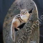 Chipmunk   (SOLD)